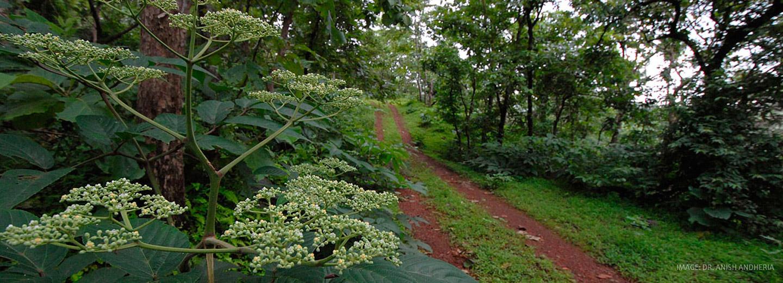 Image result for sanjay gandhi national park